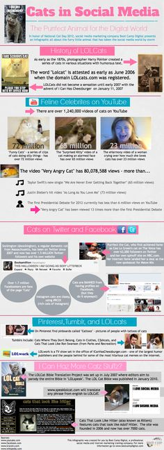 In Honor of National Cat Day Boot Camp Digital is proud to present our latest infographic about Cats in Social Media. Did you know that the history Social Media Digital Marketing, Social Media Tips, Social Networks, Social Marketing, Cat Care Tips, Pet Care, Huge Cat, National Cat Day, World Days