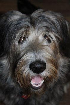 Beautiful Korea Chubby Adorable Dog - 42aa9308f692874b5d2e19dde8a281db--korean-sun  Picture_352958  .jpg