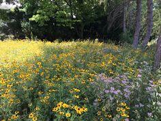 Wildlife, Natural, Plants, Plant, Nature, Planets, Au Natural