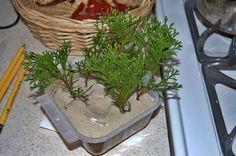Ezzel az egyszerű módszerrel könnyen szaporíthatjuk a tujáinkat! Garden Trellis, Bougainvillea, Small Farm, Outdoor Plants, Growing Vegetables, Bonsai, How To Dry Basil, Creations, Photo Wall