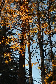evening sun on the trees