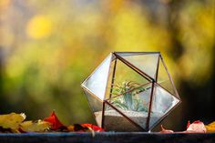 Terariu din sticla cu plante, lucrat manual, forma Icosaedru - Greenarium Terrarium, Garden, Vintage, Home Decor, Plant, Geometry, Terrariums, Garten, Decoration Home