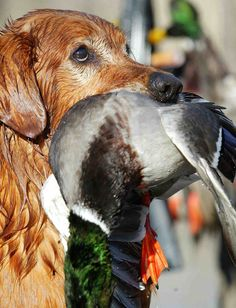 Etiquette of the Duck Hunt: 10 Things Your Daddy Shoulda' Told You. BourbonandBoots.com