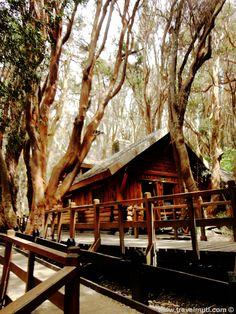 Bosque de Arrayanes, Villa La Angostura, Neuquen, Argentina.