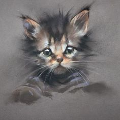 Wildlife and Domestic Animal Drawings Soft Pastel Art, Pastel Artwork, Pastel Drawing, Cat Drawing, Painting & Drawing, Pastel Portraits, Pet Portraits, Chalk Drawings, Animal Drawings