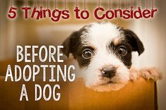 Because taking a pooch into your care is a huge responsibility and a longstanding commitment, it's crucial that you consider a few things before you decide to open your heart and home to a dog. Unfortunately,...