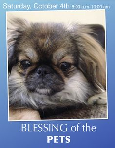The Redeemer of Calvary/El Redentor del Calvario UMC 5001 W. Ainslie St. Chicago, IL 60630 773 545 8989 BLESSING OF THE PETS. Saturday, October 4th 8:00-10:00 am