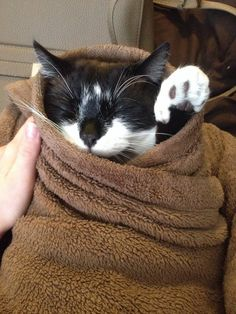 And when this purrito showed the world how to properly cuddle. | 31 Times Cats Made The World A Better Place