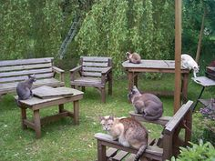 Ideas on how to build a safe Outdoor Cat Run or Cat Enclosure