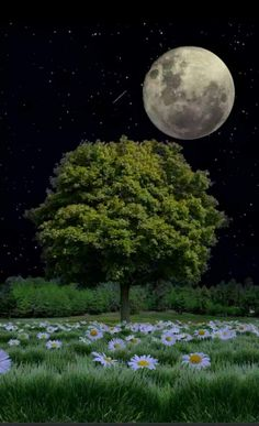 Relax with these backyard landscaping ideas and landscape design. Beautiful Moon Images, Beautiful Nature Wallpaper, Moonlight Photography, Moon Photography, Moon Pictures, Nature Pictures, Red Moon Eclipse, Moon Beauty, Shoot The Moon