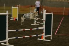 Ideas for Obstacle Course for dogs
