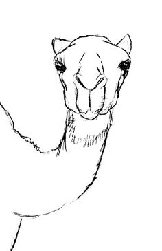 How to draw a Camel?? | Drawing Lessons