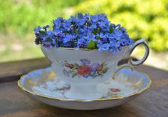 Pretty vintage tea cup with Forget-Me-Nots. Coffee Cup Art, Victorian Flowers, Botanical Flowers, Rose Flowers, Purple Roses, Fall Flowers, Vintage Cups, Forget Me Not, Types Of Flowers
