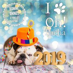 e8fc122b86b47 69 Best Boutique De Chien images   Pets, Dog, Dogs
