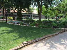 1000 images about texas shade garden on pinterest texas texas gardening and texas landscaping for Olive garden manhattan beach ca