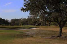 Buffalo Creek and The Preserve are two golf courses in the Bradenton, Florida area. Golf Course Reviews, Golfer, Preserves, Buffalo, Golf Courses, Golf Course Ratings, Preserving Food, Water Buffalo