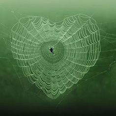 Spider web heart.