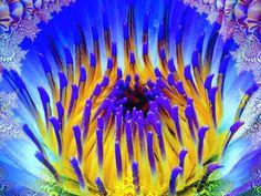 Flower of Peace - Brian Exton Art