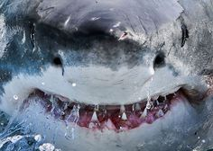 A great white shark surfaces off the coast of Gansbaai, South Africa, bearing more than a little resemblance to Bruce from Disney's Finding Nemo.Picture: Harry Stone/Caters