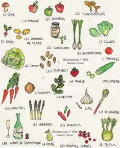 vegetable illustrations by Rachel Khoo. my 10-year-old and I are going to start drawing together; this is good for a guide!