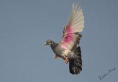 Dove by prabhu viswa