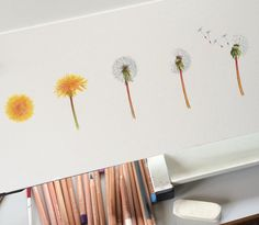 #dandelions on the #drawing #board #today :)