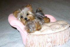 Custom Pet Portrait / Your Pet in Miniature / por GourmetFelted