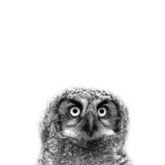 ITAP of a Great Horned Owlet http://ift.tt/2mtnSfw
