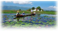 Inle Lake is a freshwater lake located in the Nyaung- shwe Township of Taunggyi District.