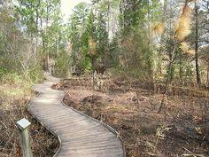North Carolina Botanical Garden, Chapel Hill - Winding Wooden Walkway