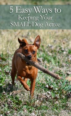 Keeping a Small Dog Active – Purina Pro Plan Coupons + Giveaway  Stay fit with your pup! (Sponsored Partnership)