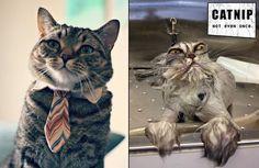 catnip cat, funny photos