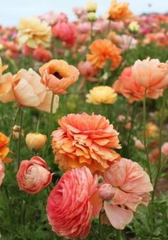 flowers. peach. pink. pretty all-things-girly