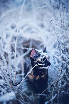 winter....Magdalena Grześkowiak Photographed Her Cat Throughout The Seasons