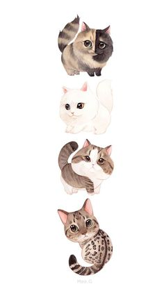 Cute Cat Wallpaper, Animal Wallpaper, Kittens Cutest, Cute Cats, Art Anime, Cute Animal Drawings, Cute Cartoon Wallpapers, Cat Drawing, Cute Baby Animals