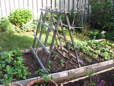 Squash Trellis Gardening | Simple Homecraft: Becoming an Urban Homesteader #8 - This week's ...