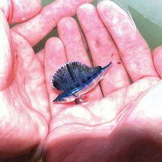 Newborn Marlin...