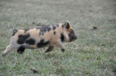 SOME PIG: Walter's childhood