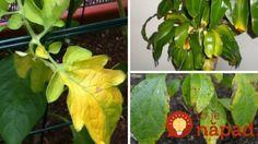 Čo sa deje s vašimi rastlinkami? Jednoduchá pomôcka, vďaka ktorej vždy budete vedieť, čo treba robiť!