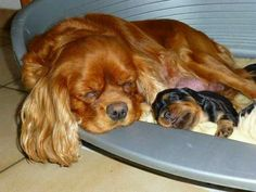 ♥ a mama has to get her sleep when the baby is sleeping.