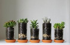 jam jar plants that don't need a lot of watering to add some green (and no mess)