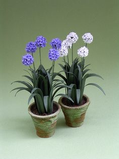 Agapanthus paper Flower Kit for 1/12th scale by TheMiniatureGarden