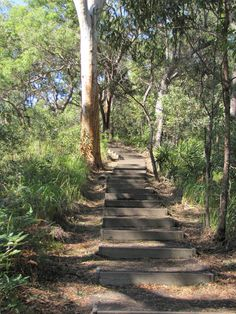 An easy 600 metre walk through National Park to the Carlo Sandblow. Rainbow Beach, Great Walks, Stairway To Heaven, Stairways, Travel Photos, Tourism, National Parks, Sidewalk, Country Roads