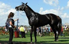 Professional Horse Racing Tipsters