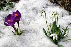 NAŠE ZAHRADY: Jaro se probouzí a příroda kvete