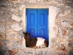 Goat , Symi #mysteriousgreece