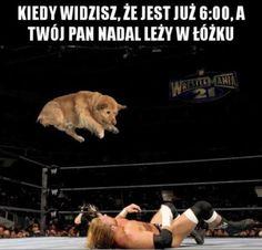 """Polubienia: 10 tys., komentarze: 74 – Codzienny Suchar Humor Memy (@codziennysuchar) na Instagramie: """"#codziennysuchar #codzienny #suchar #humor #polska #fun #mem #beka #hahaha #haha #hehe #heheszki…"""""""