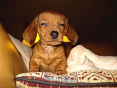 Can My Pet Catch a Cold?   PetMeds Blog
