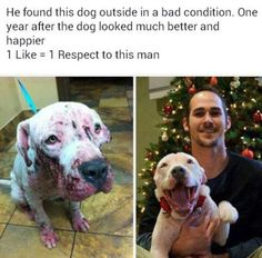 How many likes for this man  ♥ ♥.          Stop Animal Cruelty.  Thank god for the people who help Rescue them!!!