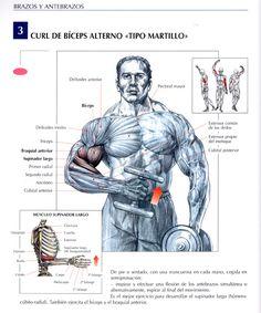 Curl de biceps alterno | Alternate biceps curl - http://fitnessallya.com/curl-de-biceps-alterno-alternate-biceps-curl/